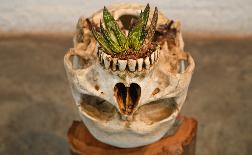 CRADLE (Homo sapiens garden). Juan Zamora. Installation with a skull with a plant in its paladar. 30 x 30 x 75 cm.2016